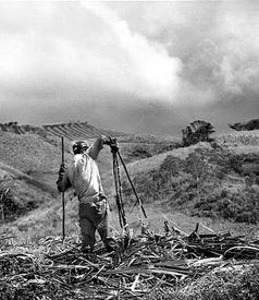 brazilian-sugar-worker